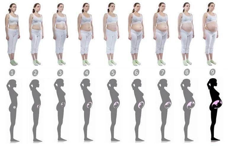 На каком сроке беременности живот начинает расти, ощущения, правильное питание