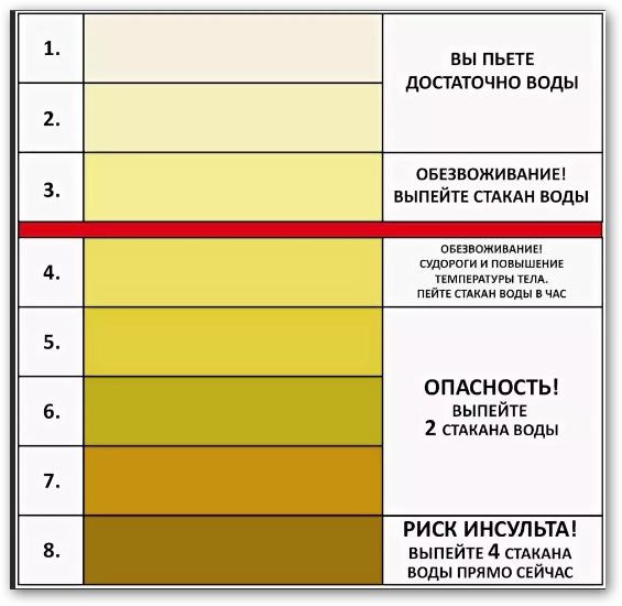 Почему моча стала желтой у женщин: основные причины изменения цвета