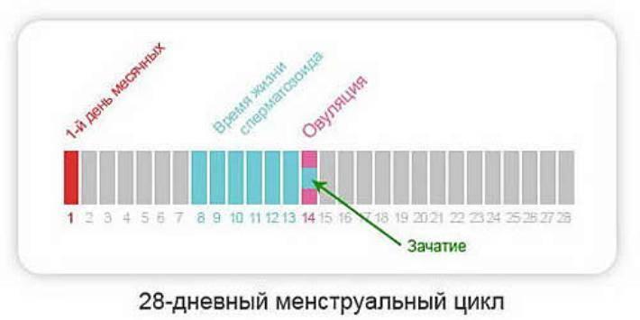 Можно ли забеременеть после овуляции и до овуляции: за 2, 3, 4 дня, через 3-5 дней, возможна ли беременность при незащищенном па