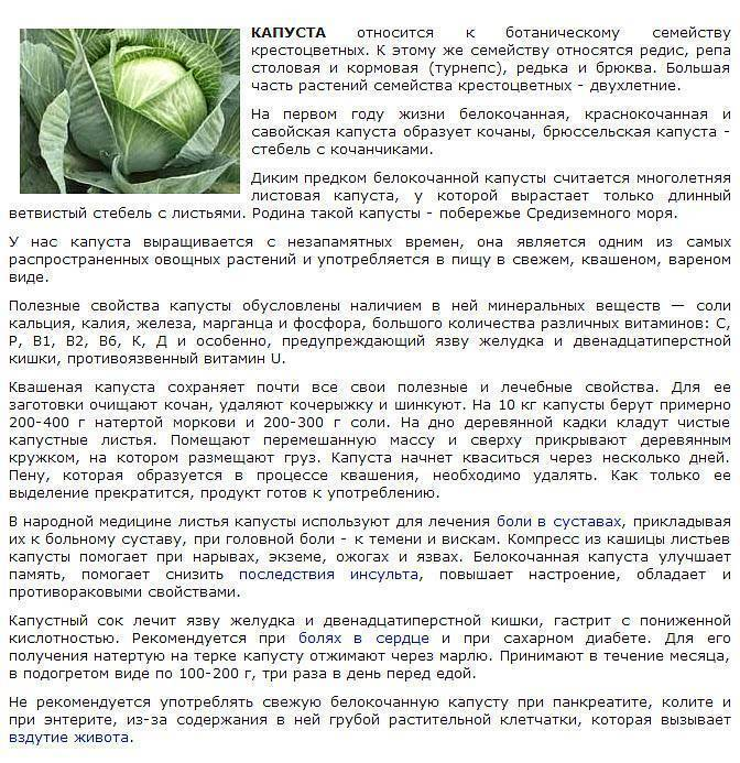 Компресс из капустного листа при лактостазе + видео