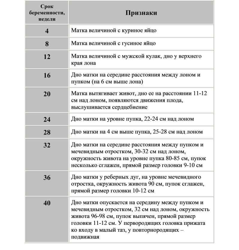 Каким должен быть размер живота: параметры по неделям беременности