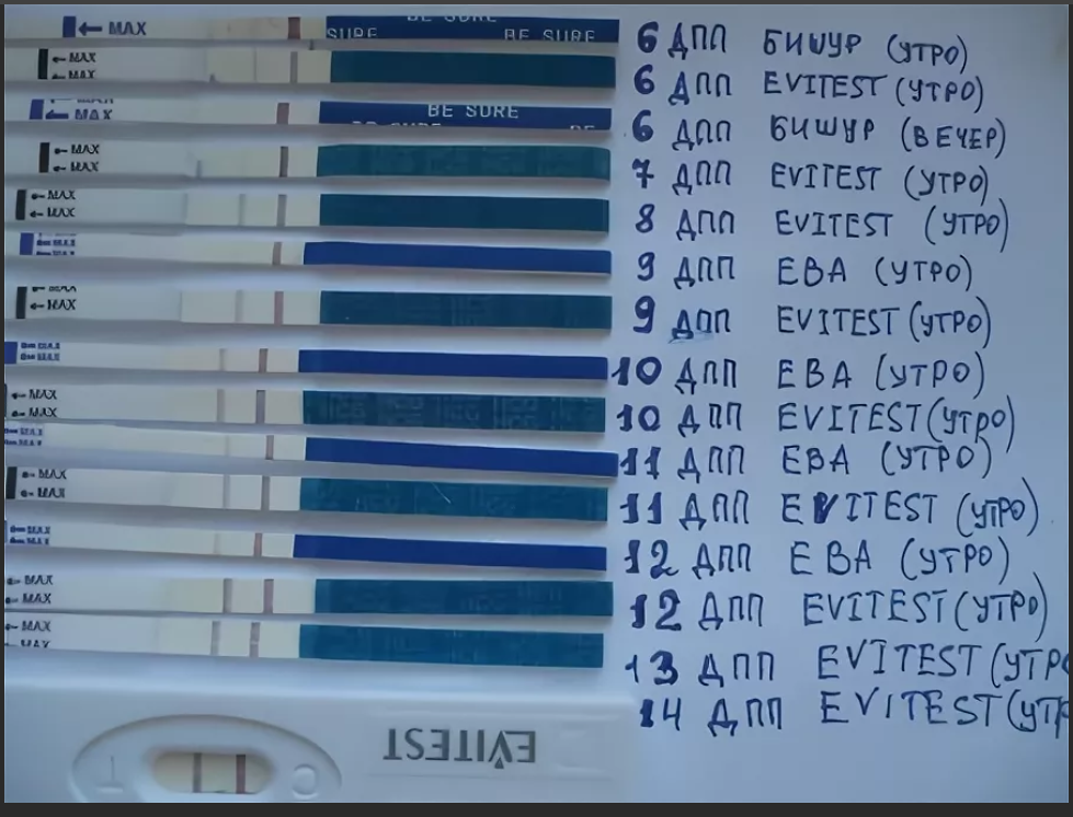 Таблица хгч по дням после эко и переноса эмбрионов: норма показателей и динамика