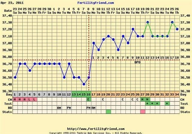 Как измерить базальную температуру для определения беременности до задержки