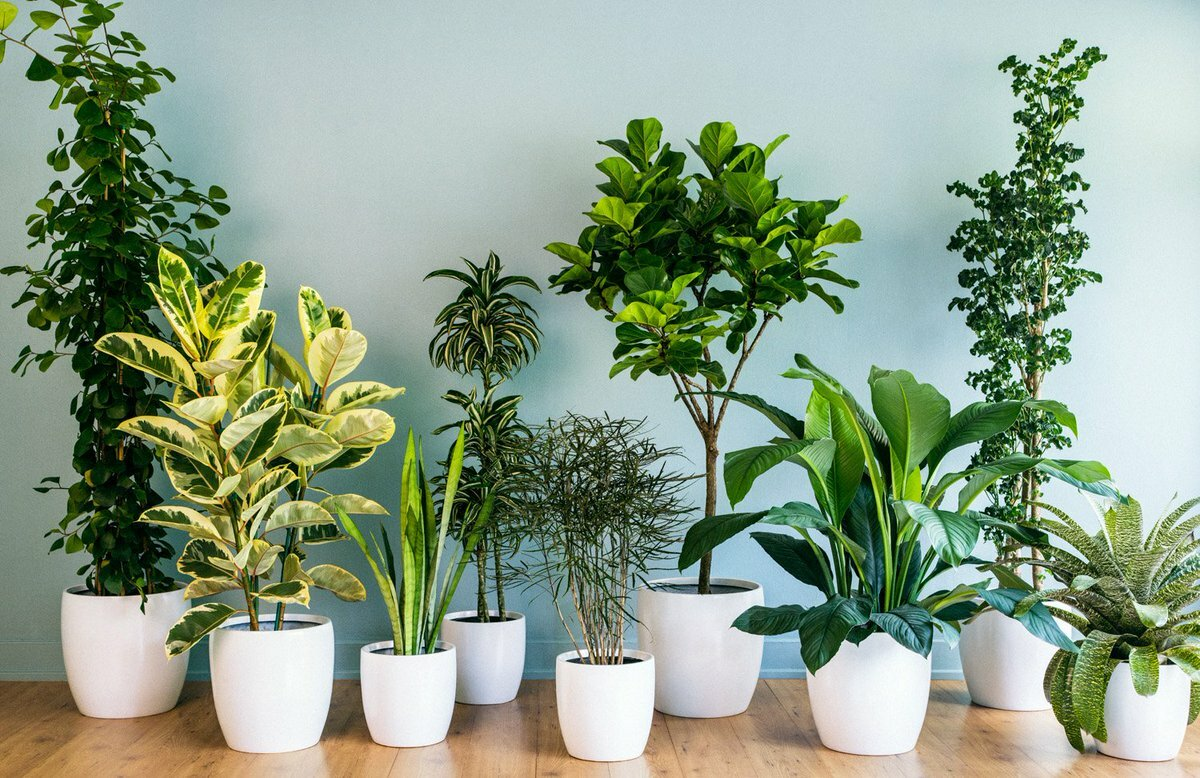 Растения для детской комнаты – какие цветы безопасны для юных исследователей