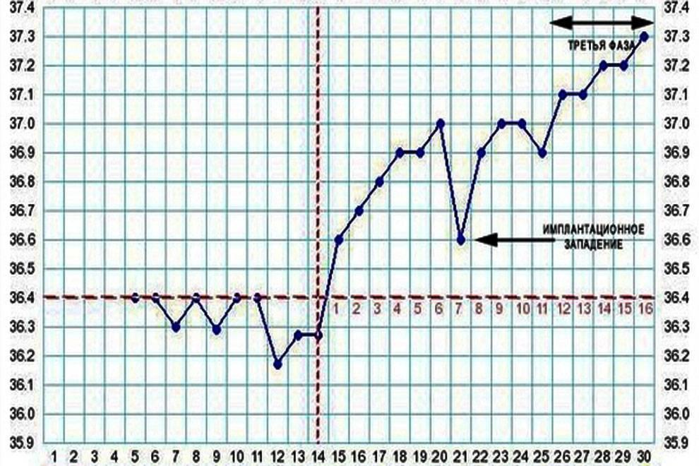 Базальная температура при беременности: где измеряется и как правильно это делать