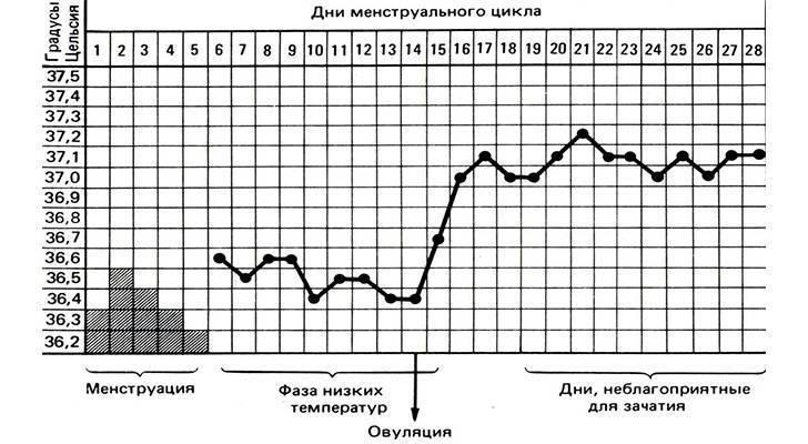 Базальная температура перед месячными: какая она должна быть после овуляции и когда должна снижаться (график)