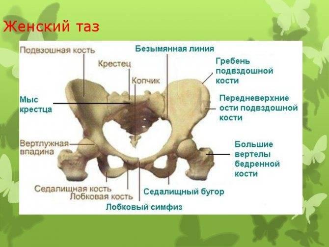 Какими признаками и ощущениями оно сопровождается?, когда при беременности до родов начинается расхождение костей таза - все о суставах