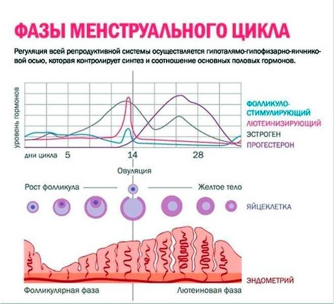 Можно ли вернуть менструации в начале менопаузы + как восстановить месячные при климаксе и зачем это нужно