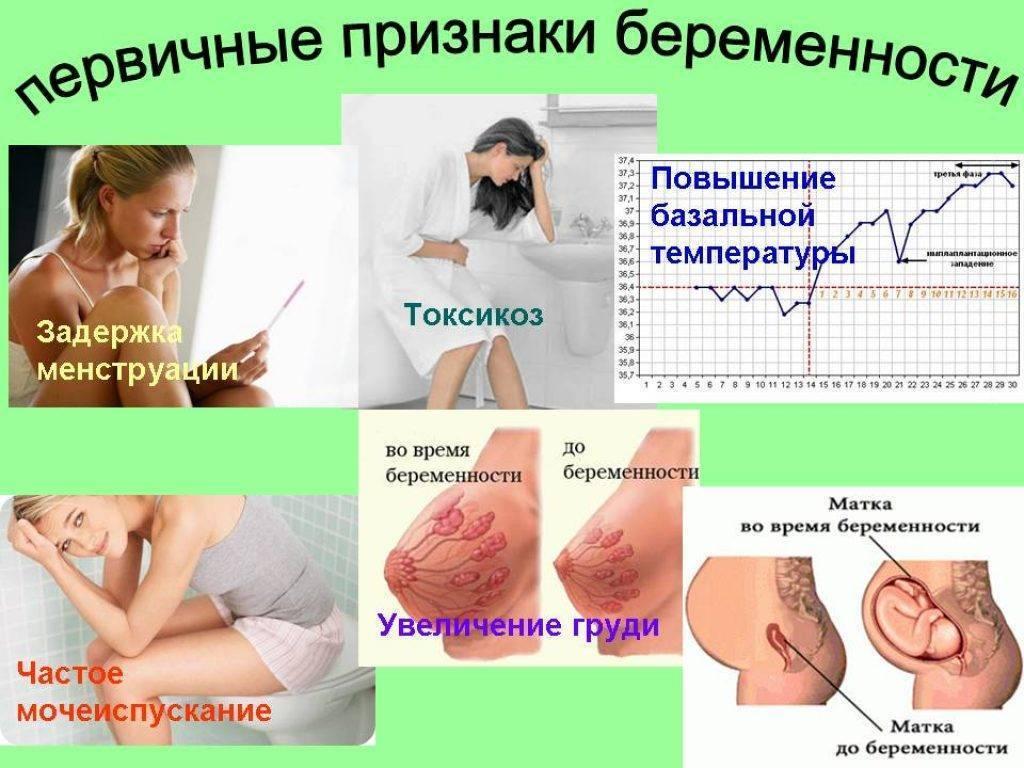 Первые признаки беременности на ранних сроках 1 неделя