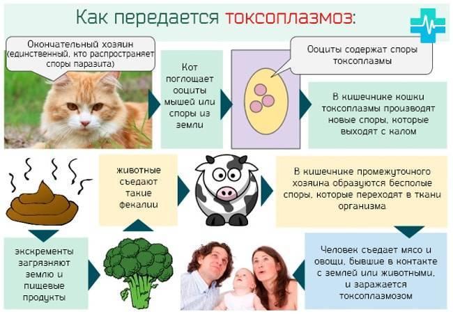 Токсоплазмоз - симптомы у человека, схема лечения у взрослых, детей