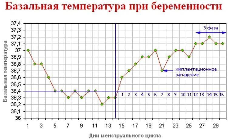 Температура при беременности на ранних и поздних сроках