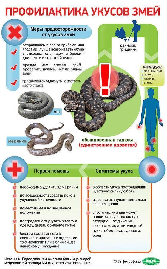 Симптомы укуса гадюки, помощь пострадавшему, последствия укуса