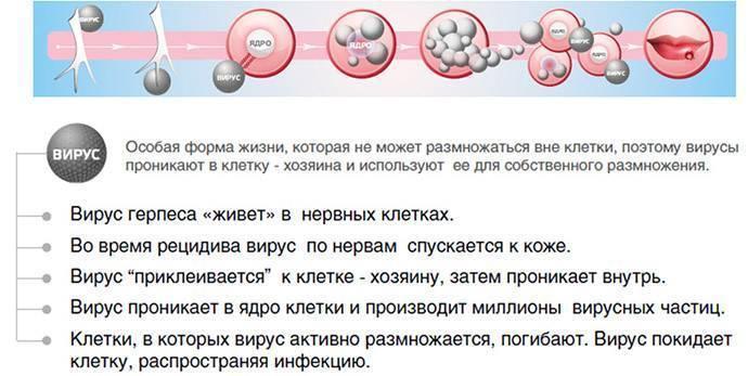 Особенности симптомов и лечения вируса герпеса 6 типа у взрослых