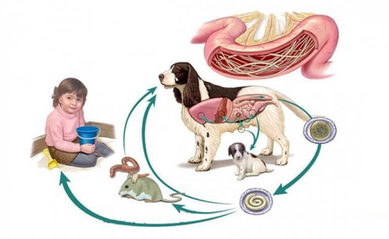 Чем опасен токсоплазмоз для детей, его симптомы и эффективное лечение