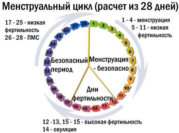 На какой день после месячных наступает овуляция? когда происходит и через сколько дней начинается? может ли быть сразу после месячных и бывает ли она каждый месяц?