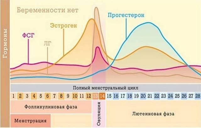 Температура во время месячных: какая норма, может ли повышаться в первые дни?