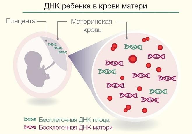 Определение пола ребенка по крови: методы и их достоверность
