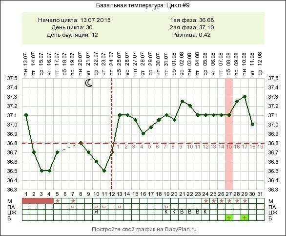 Базальная температура при беременности на ранних сроках до задержки: график, фото