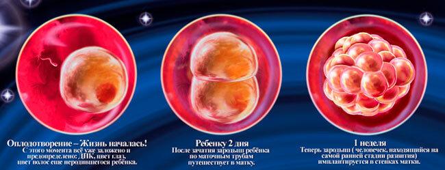 На каком сроке беременности и какими методами можно определить пол ребёнка