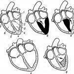 Функциональная кардиопатия у детей — что это такое - популярные болезни