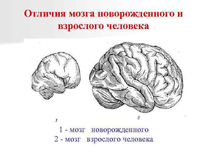 Незрелость коры головного мозга ребенка: последствия и лечение новорожденных