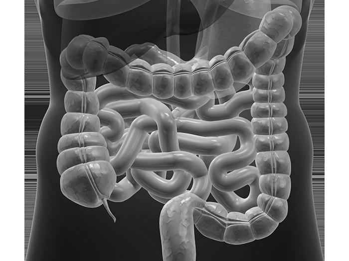 Долихосигма кишечника у ребенка - что это такое, каковы симптомы и лечение болезни?