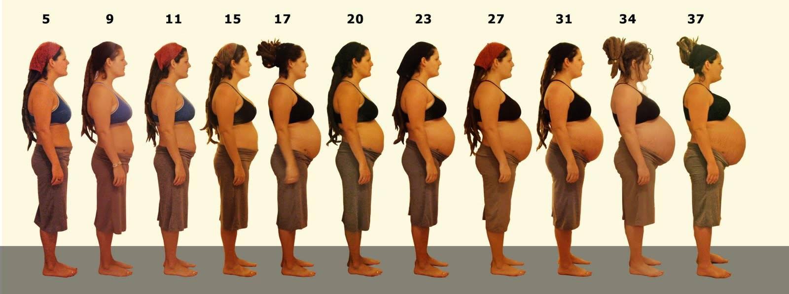 Возможные причины большого живота при беременности
