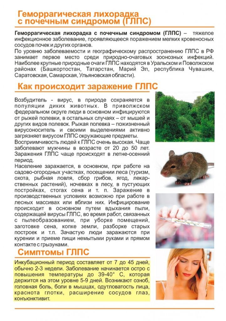 Мышиная лихорадка:  симптомы у женщин и лечение