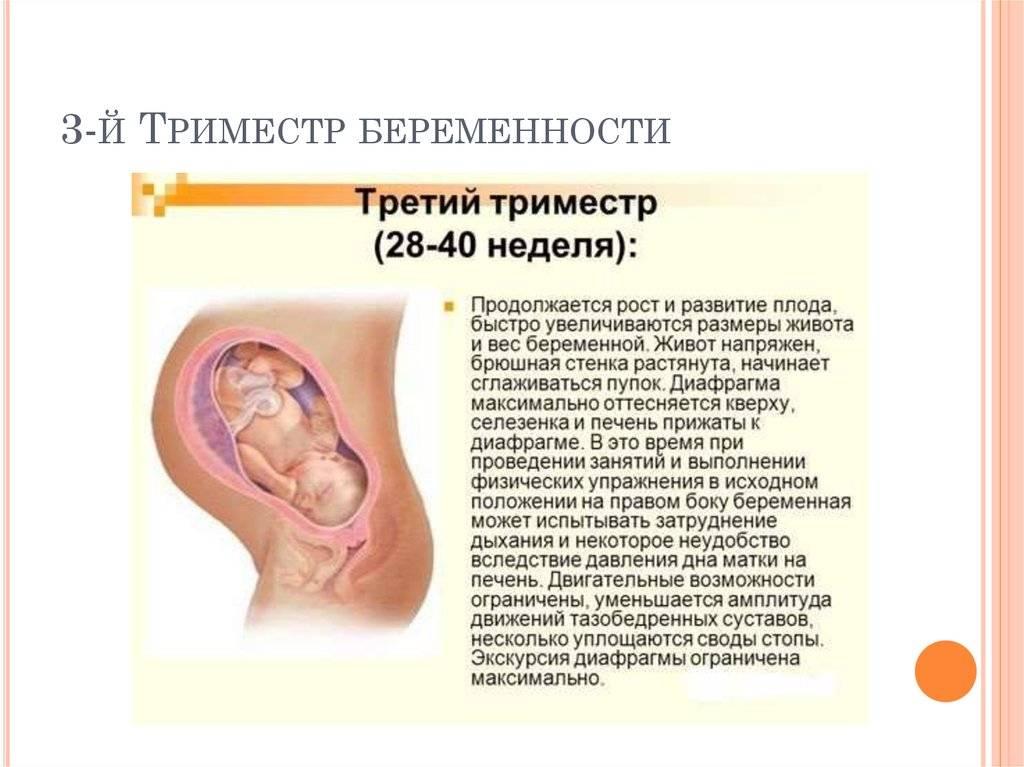 На каком сроке беременности начинает шевелиться плод
