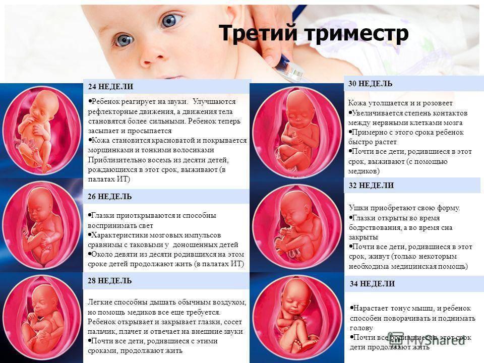 Первые шевеления плода при первой беременности – когда и как дает о себе знать малыш?