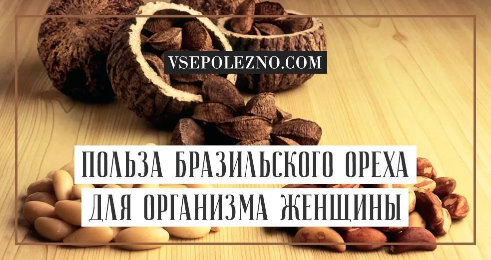 Молочные грецкие орехи: польза и вред, понятие зрелости (спелости) плодов, полезные свойства для организма, а также какие витамины содержит, когда собирать?