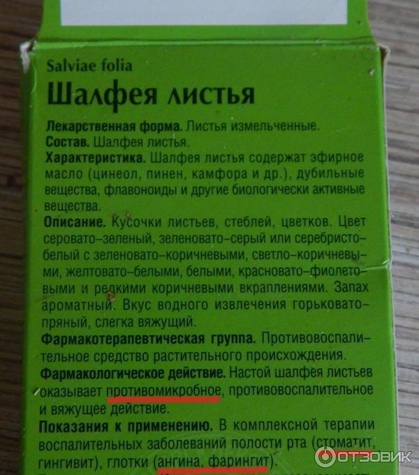Как принимать шалфей для зачатия: для овуляции, как правильно пить отвар, чтобы забеременеть, в пакетиках, настой, листья, лечебные свойства, противопоказания