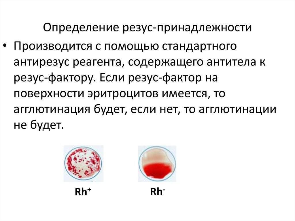 ✅ анализ на определение резус фактора плода по крови матери - денталюкс.su