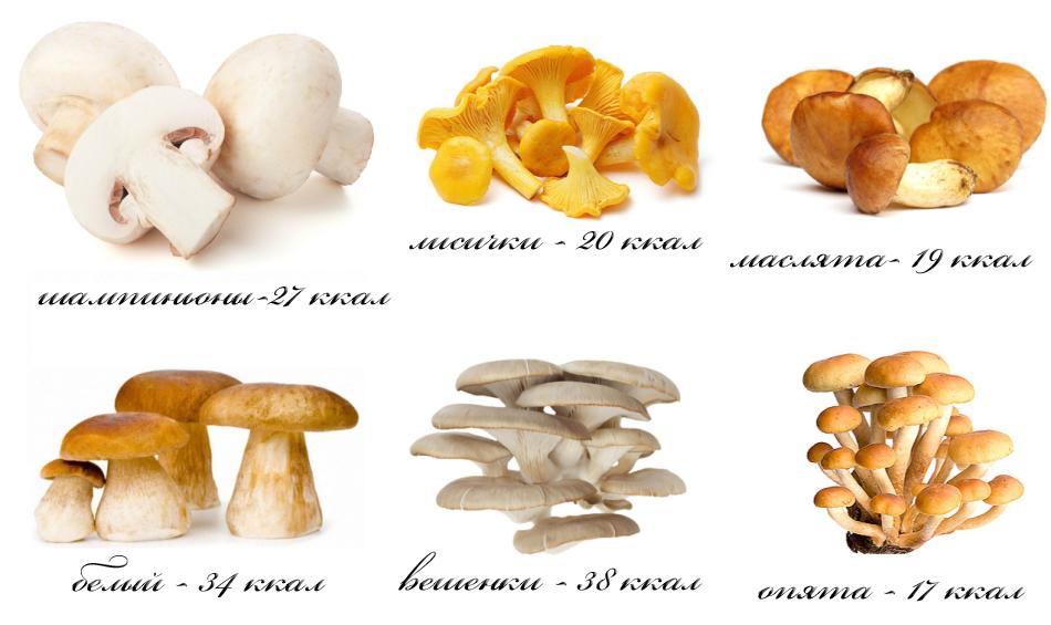 Какие грибы можно есть кормящей матери при грудном вскармливании