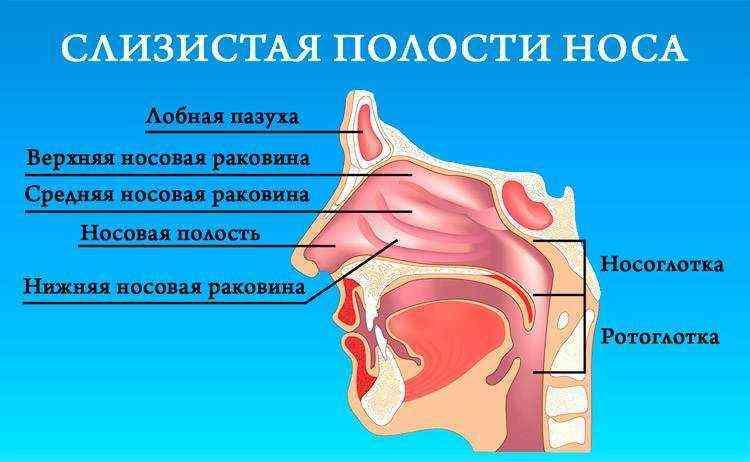 Как снять отек носа у ребенка аллергического характера: лечение слизистой оболочки носоглотки
