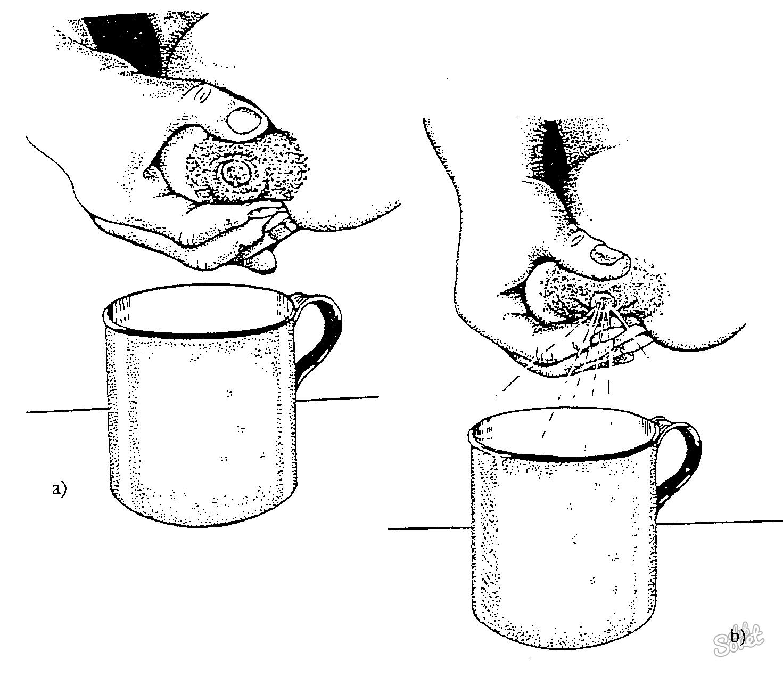 Молочный заводик: как повысить лактацию