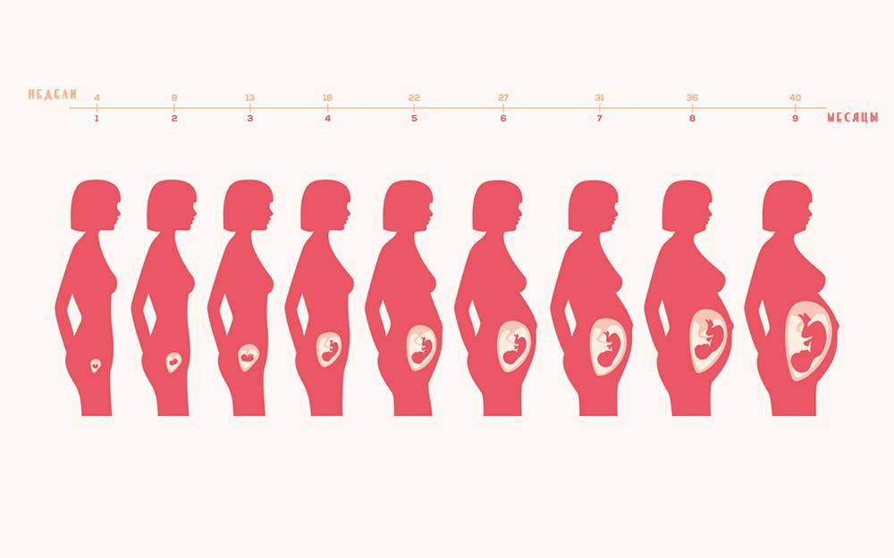 На каком сроке беременности начинает расти грудь?