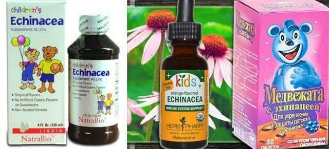Эхинацея для иммунитета детям, сироп эхинацеи для детей, эхинацея для иммунитета в таблетках, каплях – как давать?