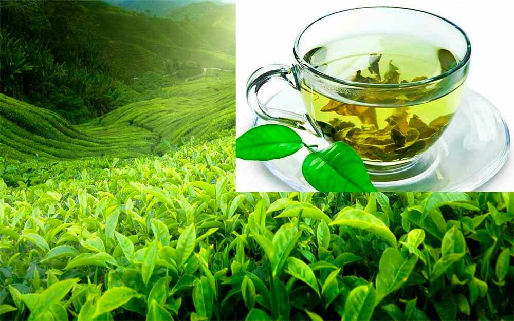 С какого возраста можно давать ребенку чай: зеленый, черный, иван-чай и другие