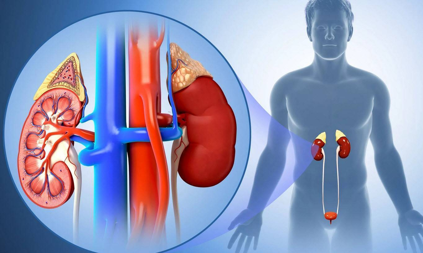 Пиелонефрит у грудничка: симптомы, причины, лечение, признаки пиелита у детей до года