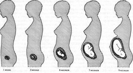 Как меняется живот во время беременности фото   все о беременности