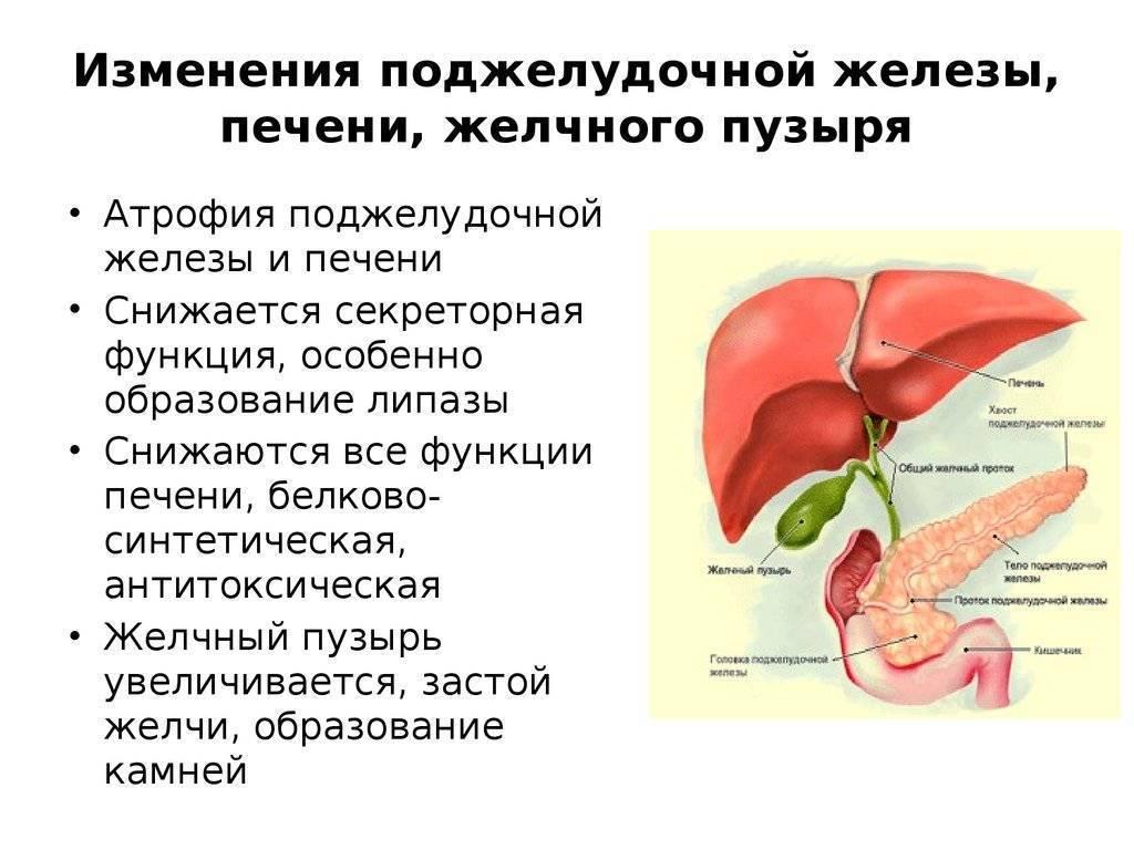 Реактивные изменения поджелудочной железы у ребенка причины