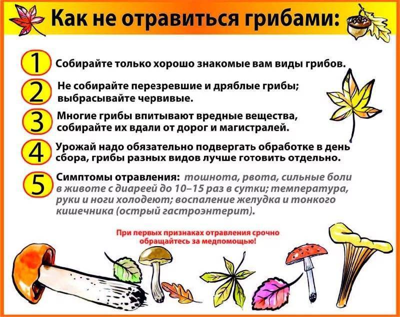 Что делать при отравлении ядовитыми растениями?