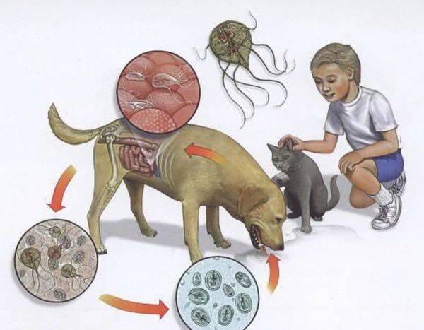 Как выявить и вылечить гельминтозы у детей