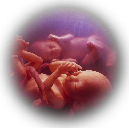 Беременность двойней по неделям
