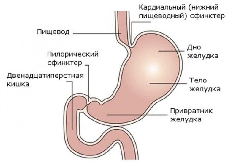 Питание при остановке желудка. как помочь ребенку