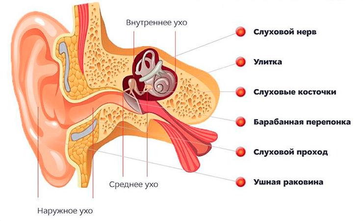Шунты в ушах у детей - педиатор