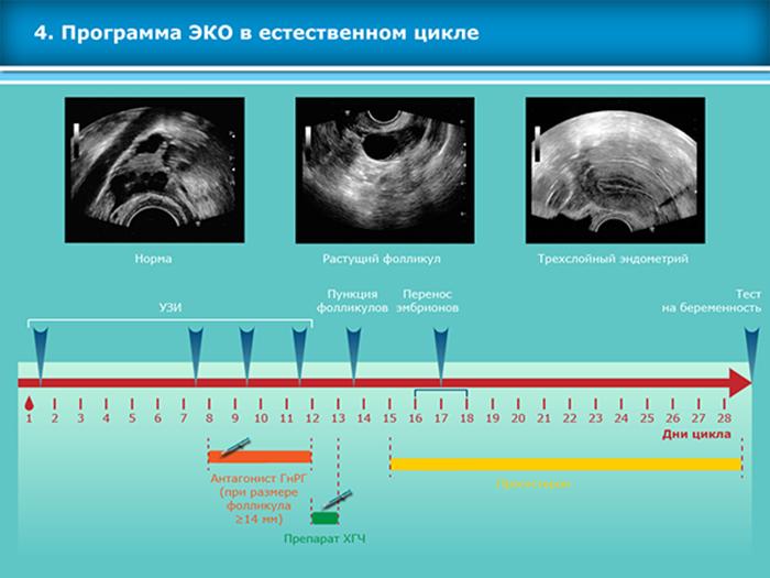 Подсадка эмбрионов при эко (27 фото): как происходит перенос, ощущения по дням, сколько эмбрионов подсаживают, тянет живот как перед месячными и низкий прогестерон