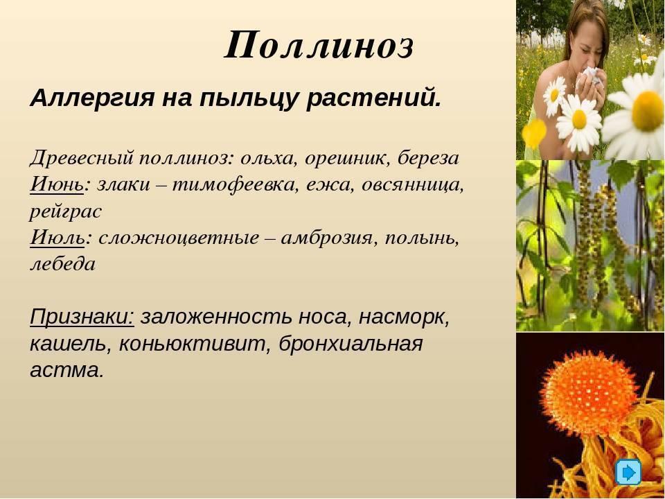 Аллергия на пыльцу: 7 способов уменьшить симптомы поллиноза. диатез и аллергия у детей