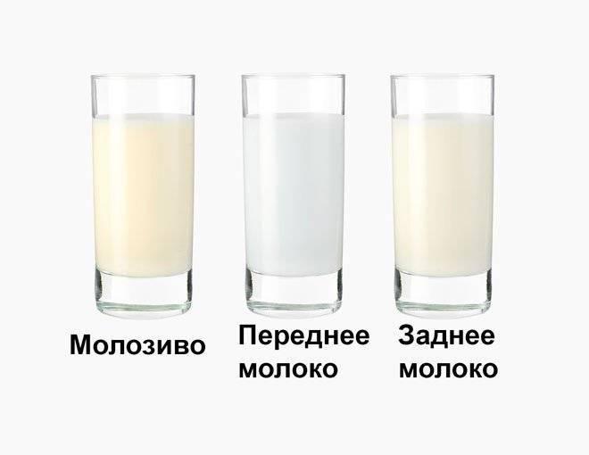 Почему грудное молоко стало прозрачным — топотушки